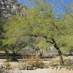 The Arboretum at Arizona State University
