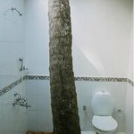  Master Peace open bathroom with a coconut tree inside.