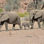 2 elephants with 2 week old baby