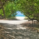 Eagle Beach through the divi divi trees