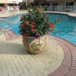 Poolside flower pot