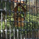 A nesting parakeet in the aviary