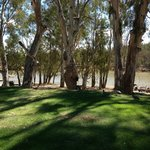 View of the Murray River from the park