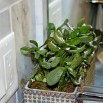                    Live garden plant in bathroom