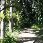 another pathway through our beautiful tropical garden