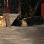                    One of the resident sea lions