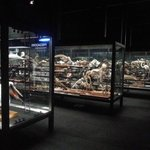 Some of the glass cabinets containing taxidermy and skeletons