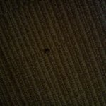 Bug on carpet