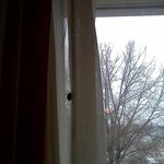                    Bug on curtain