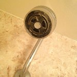 Crusted Showerhead