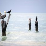 Birdwatching at Holbox