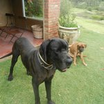 Jack & George, the sweet family dogs :-)