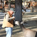                    feeding the deer outside our cabin
