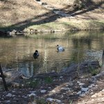                    Ducks at the Creek