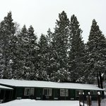 Beautiful Snowy Evergreens on Property