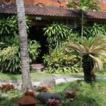 garden in front of our bungalow