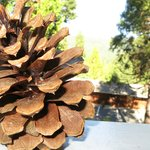                   pinecone on our seating area outside our door with nice views