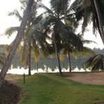  Swinging coconut trees view