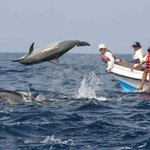 Paradiso Travels - Private Day Tours