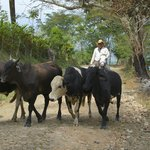 Colombian Cowboys on the road to La Finca