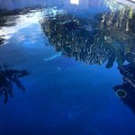                    Pool reflections