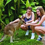 Photo provided by Kuranda Koala Gardens