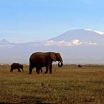  Amboseli