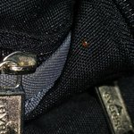                                                        bed bug on bag
