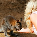 Linda feeding one of the locals