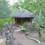  The jungle retreat!