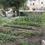  A Vegetable Garden at La Posada de Taos Provides Fresh Ingredients