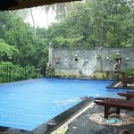 Jungle pool