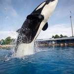 Sea World/Shamu