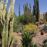  Desert Botanical Garden