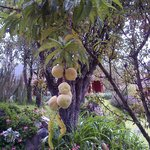 Peaches at Villa Urubamba