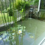  Water fall and fish pond