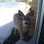 A curious doe looking into room 107