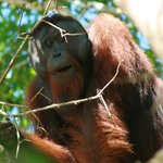                    Most awesome orangutan ever