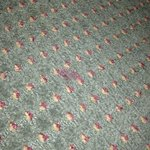                    Blood on carpet.