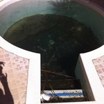                    Outside Jacuzzi with additional animals / bacteria and dirt for you to relax i