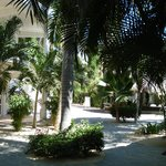 The tropical setting around the resort.