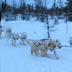  Dog Sledding