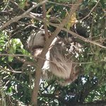                                      the sloth!!! just down the street...