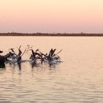 Pelicans off the dock.