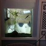 The stinky fish tank in the honeymoon suite. In the wall between the room and