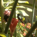                    hummingbird outside my hotel window