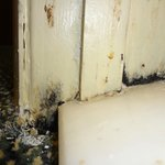                                      Mold in Room.