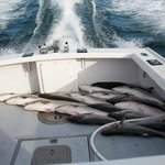 Magellan Sportsfishing Charters