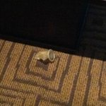 Used condom on the floor!
