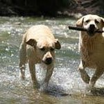 Innkeeper's dogs in the Creek